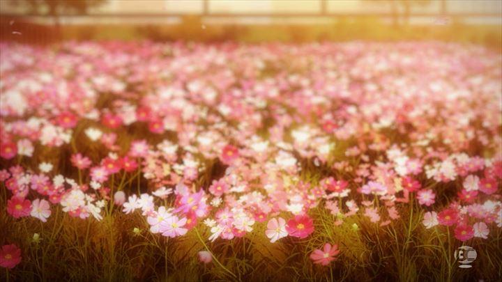 アイドルマスター シンデレラガールズ コスモスの花園